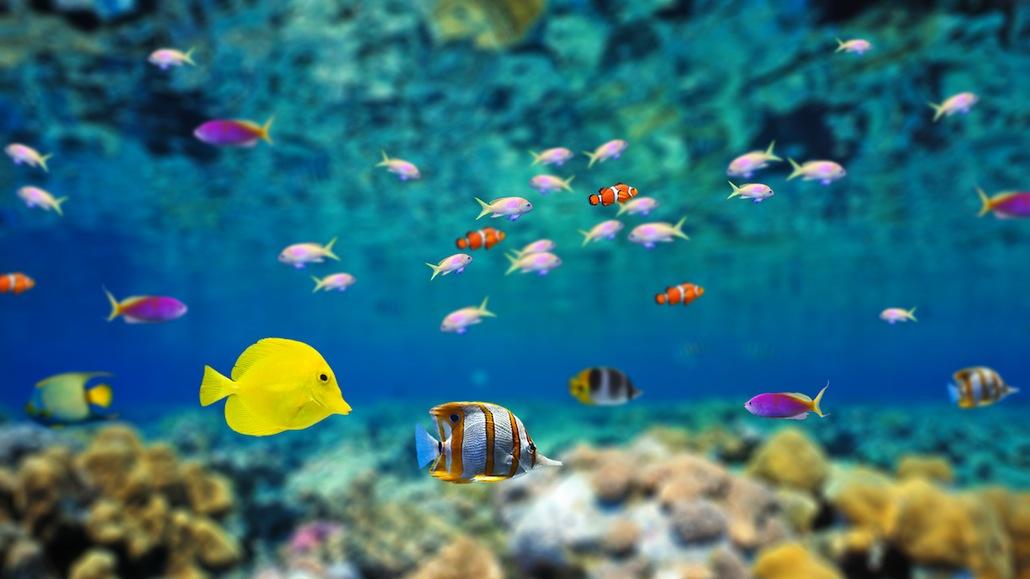 poissons-ocean