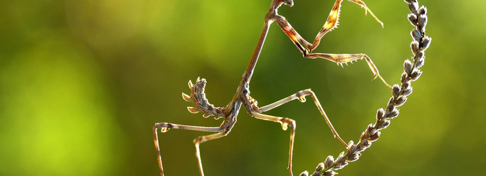 in-focus-national-geographic